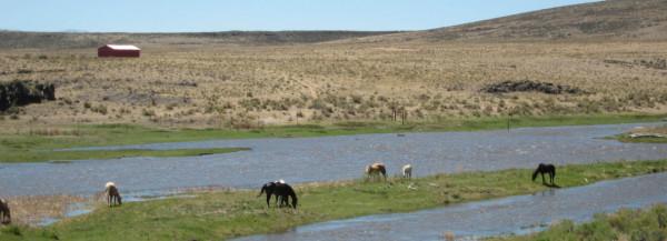 Rio Grande Ranches
