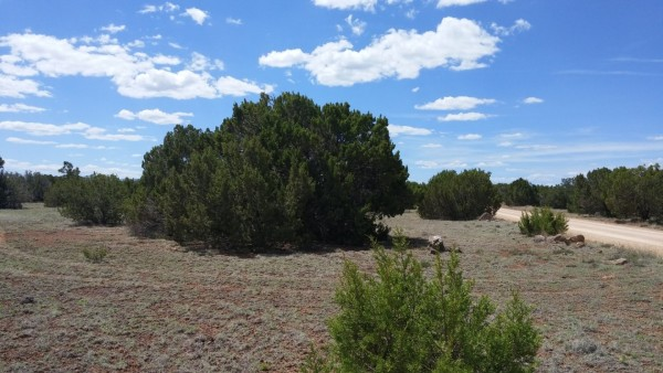 1.16 Acres for Sale in Concho, AZ