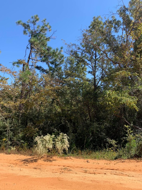 1.14 Acres for Sale in Alford, FL
