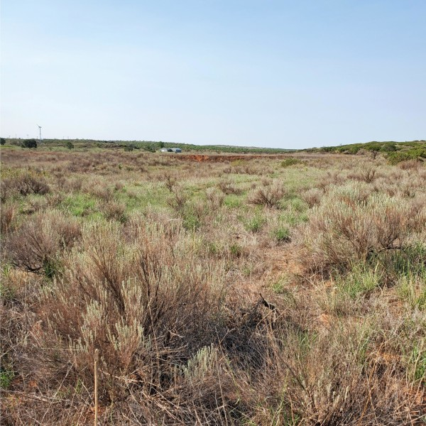 20 Acres for Sale in Amarillo, TX
