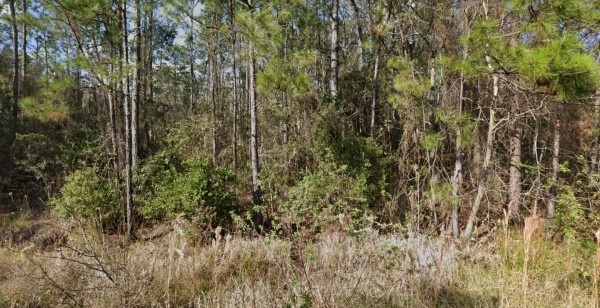 1.25 Acres for Sale in Palatka, FL