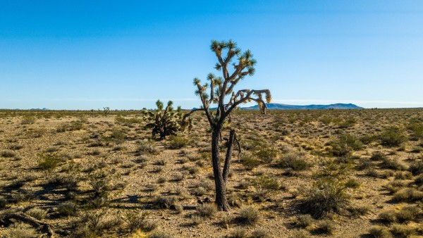 39.97 Acres for Sale in Yucca, AZ