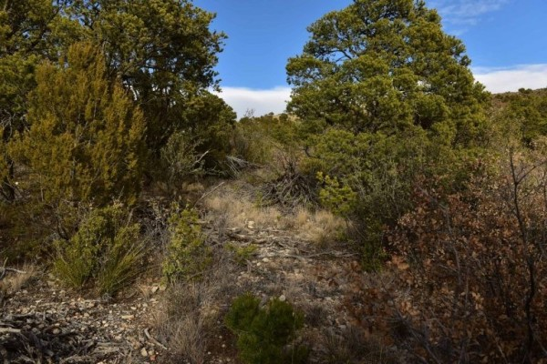 1.2 Acres for Sale in Cloudcroft, NM