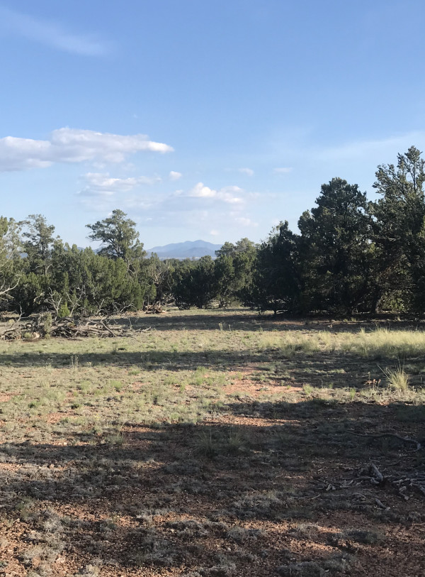 19.98 Acres for Sale in Williams, AZ