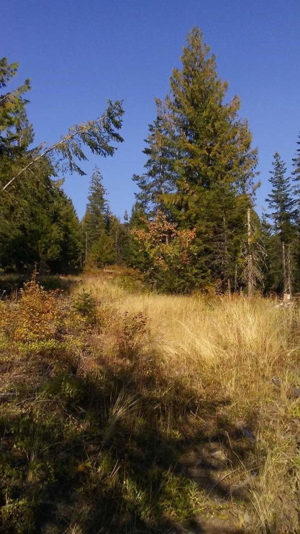 5 Lots for Sale in Saint Maries, ID