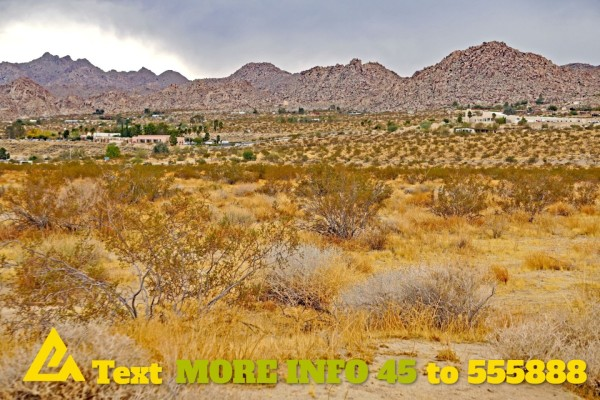 1.25 Acres for Sale in Joshua Tree, CA