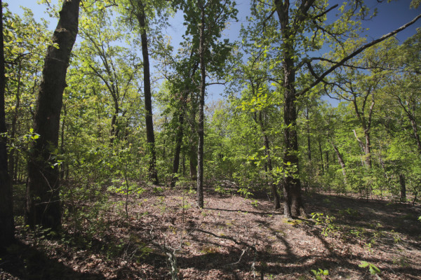 20 Acres for Sale in Salem, MO
