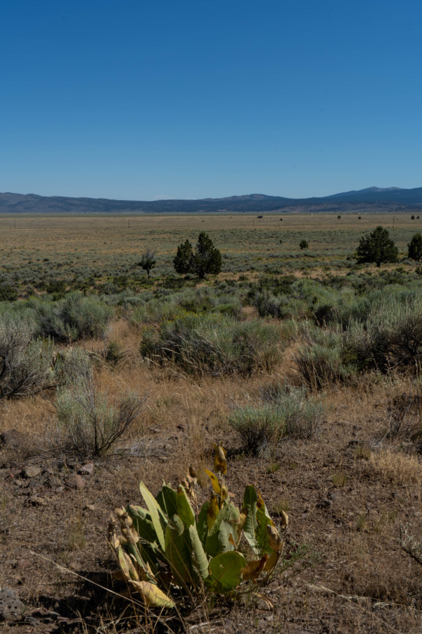 19.9 Acres for Sale in Termo, CA