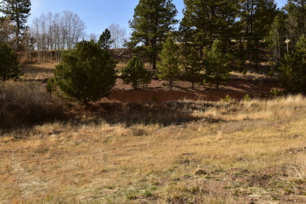 1.33 Acres for Sale in Divide, CO