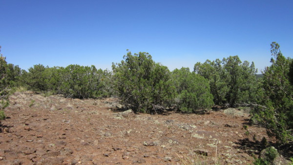 1.24 Acres for Sale in Concho, AZ