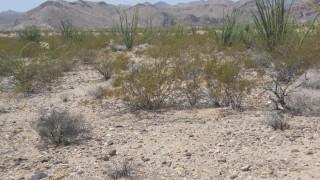 1.18 Acres for Sale in Sanders, AZ