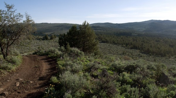 20.68 Acres for Sale in Madeline, CA