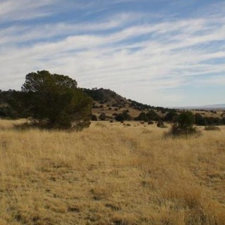 40 Acres for Sale in Concho, AZ