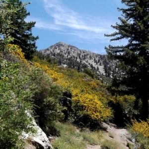 0.17 Acres for Sale in Cedar Glen, CA