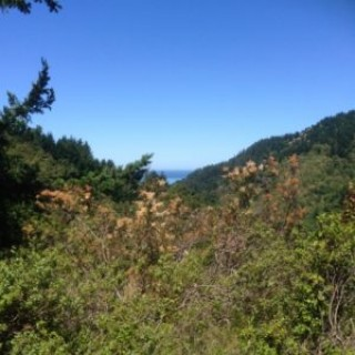 0.3 Acres for Sale in Shelter Cove, CA