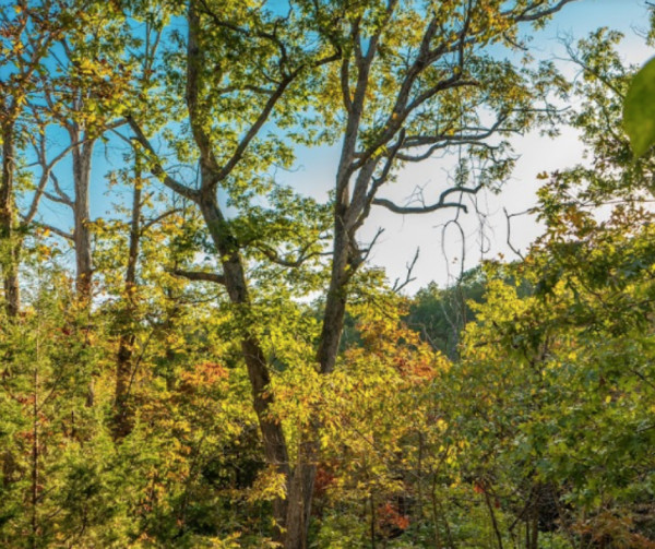 20 Acres for Sale in Dixon, MO