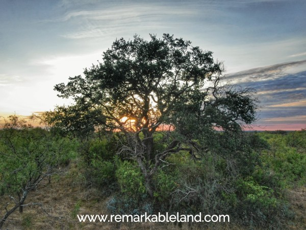 60 Acres for Sale in Fort Mckavett, TX