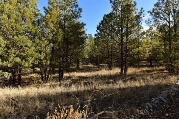 1.01 Acres for Sale in Cloudcroft, NM