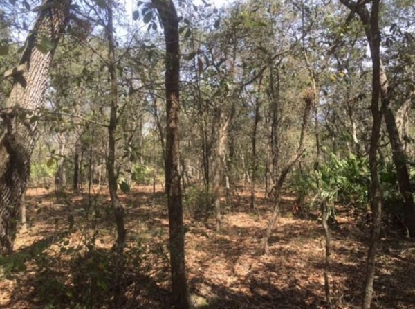 0.46 Acres for Sale in Interlachen, FL