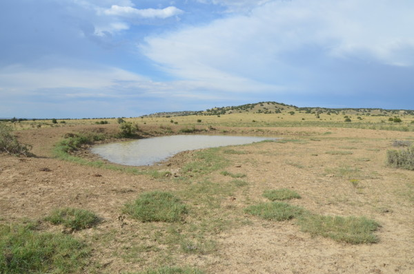40.92 Acres for Sale in Model, CO
