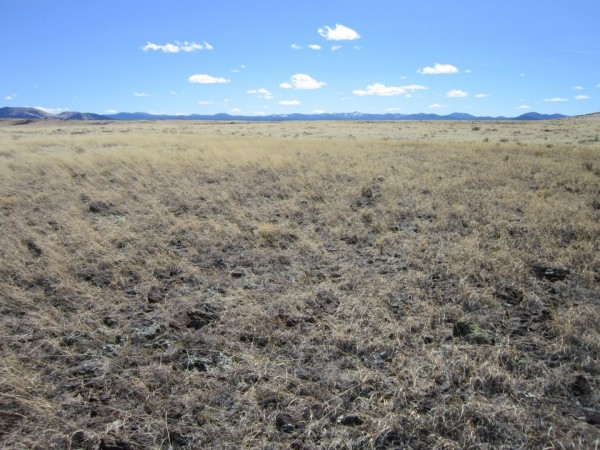 1.05 Acres for Sale in Concho, AZ