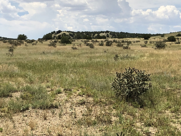 41.01 Acres for Sale in Model, CO