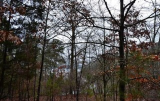 0.82 Acres for Sale in Elberton, GA