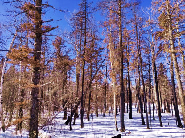 1.2 Acres for Sale in Blanca, CO