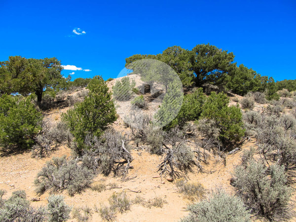 12.28 Acres for Sale in Fort Garland, CO