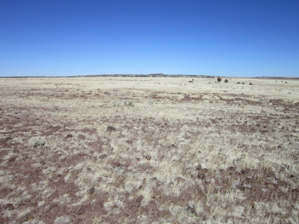 1.01 Acres for Sale in Concho, AZ