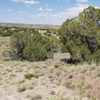 37.08 Acres for Sale in Saint Johns, AZ