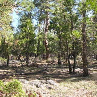 2.33 Acres for Sale in Bonanza, OR