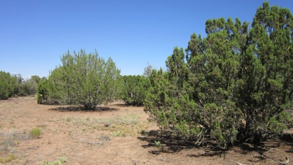 0.29 Acres for Sale in Show Low, AZ