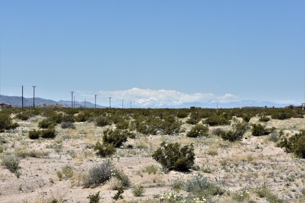 50 Acres for Sale in Twentynine Palms, CA