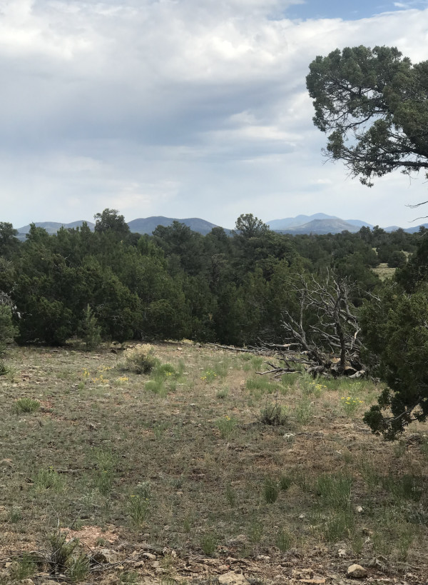 36.3 Acres for Sale in Williams, AZ