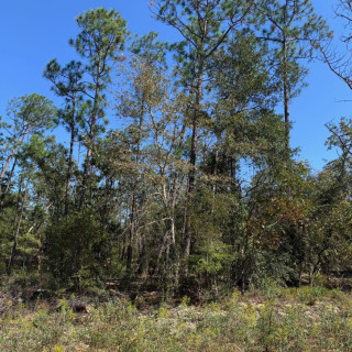 1.04 Acres for Sale in Alford, FL