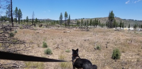 2.38 Acres for Sale in Chiloquin, OR