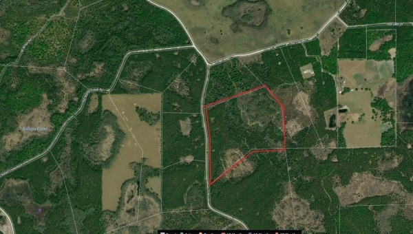54.3 Acres for Sale in Chiefland, FL