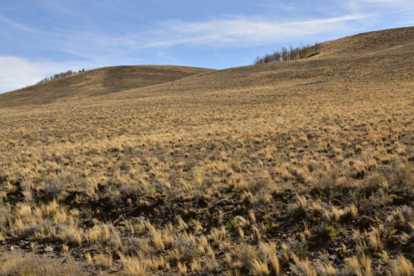 5.3 Acres for Sale in Hartsel, CO