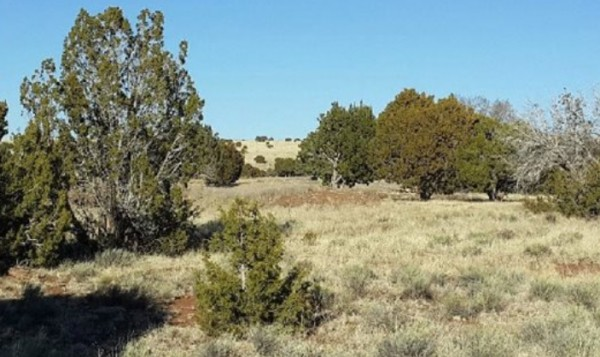 1.12 Acres for Sale in Concho, AZ