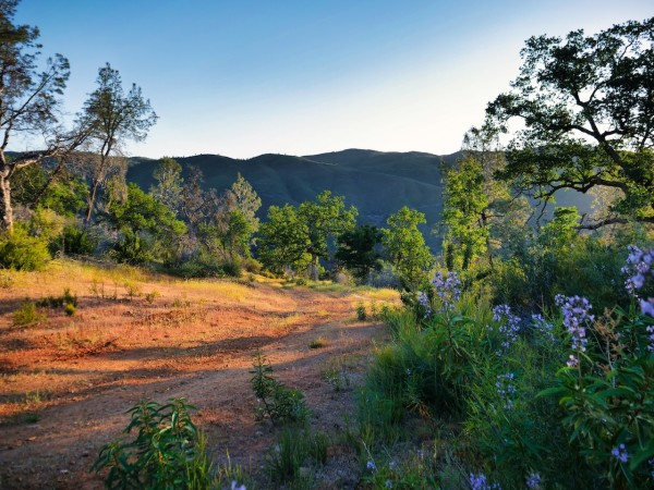 40 Acres for Sale in Coulterville, CA