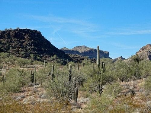 40 Acres for Sale in Valentine, AZ