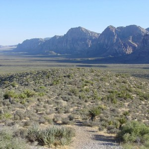0.63 Acres for Sale in Pinon Hills, CA