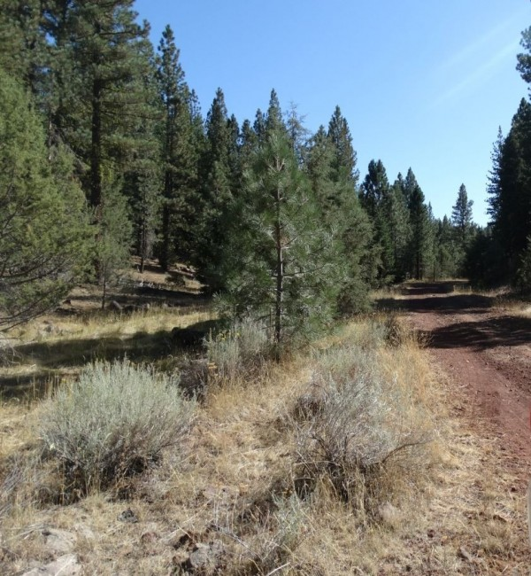 1.2 Acres for Sale in Alturas, CA