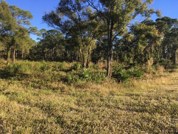 1.4 Acres for Sale in Palm Bay, FL