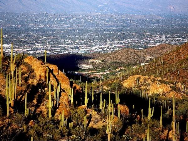 40.87 Acres for Sale in Holbrook, AZ