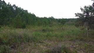 2.5 Acres for Sale in Marianna, FL
