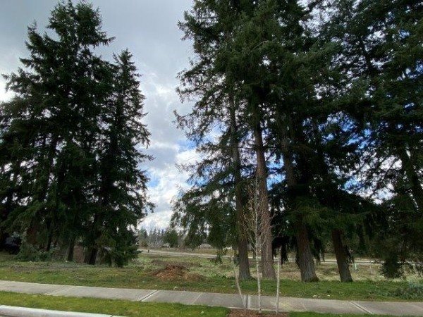 8 Lots for Sale in Edgewood, WA