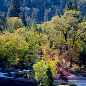 0.11 Acres for Sale in Crestline, CA