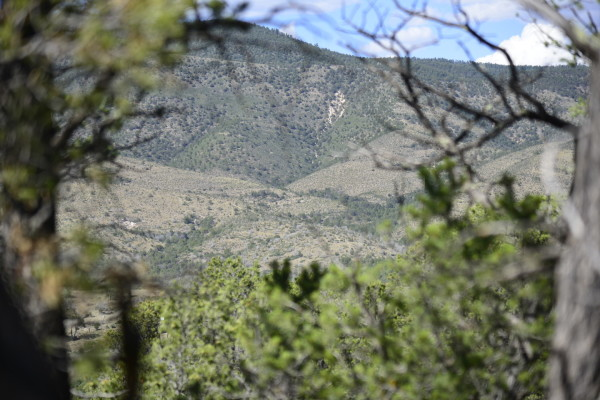 1.14 Acres for Sale in Timberon, NM